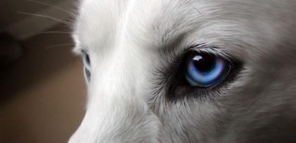 Πώς βλέπει ο σκύλος;