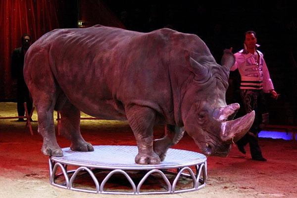 circus-animals247133334-3E6A-CAF0-06CA-D180E3AFF28E.jpg