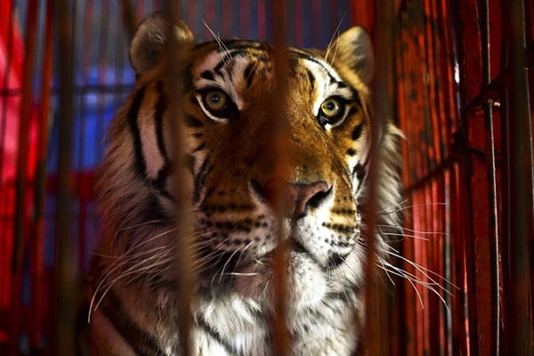 circus-animals3904A52E0-B4A6-C973-5A17-00CCEC940F13.jpg