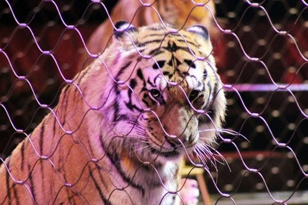 circus-animals4BB225128-CEFB-CFC4-7A5D-3A75E1C3A588.jpg