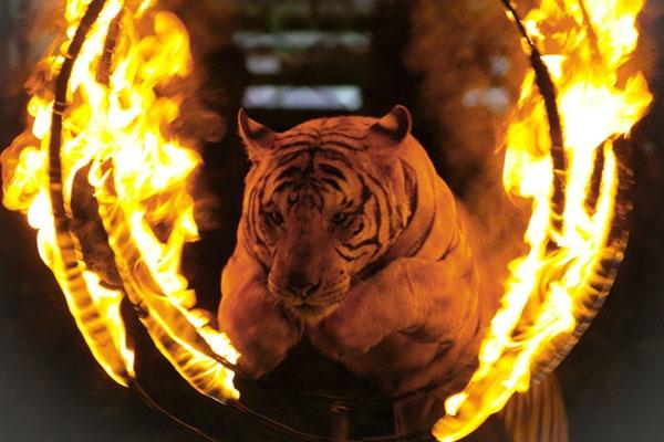 circus-animals5869E494E-038F-1330-0D5A-FE6D42972BDC.jpg
