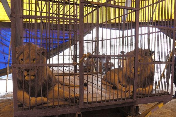 circus-animals7C8CF969B-D86C-61AD-3DF9-24E6ED43D4F6.jpg