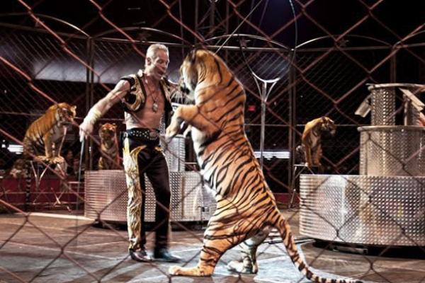 circus-animals864FD1879-85FD-80F5-89AD-B28DCD910E77.jpg