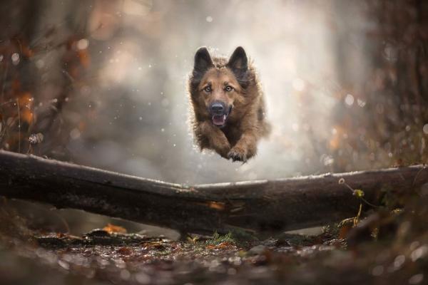swns-jumping-dogs-015E9E616B-C8DA-918A-26E8-E775F1A8C7DC.jpg