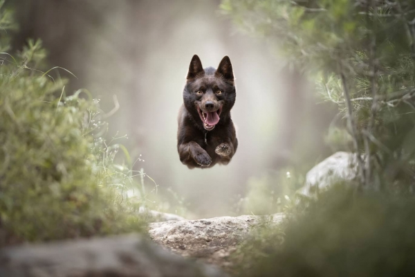 swns-jumping-dogs-0290713A6A-433B-AA96-1EB8-D0174454F3DD.jpg