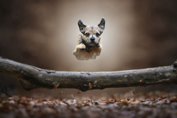 swns-jumping-dogs-073212A7BC-3ACA-2C75-E7F5-9765C61B68F5.jpg