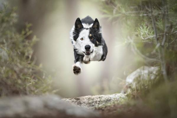 swns-jumping-dogs-09497831AC-68C4-4DF5-E6F2-E0E72FF1C17E.jpg