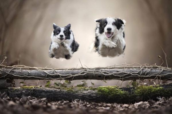 swns-jumping-dogs-129CC51A0A-0F88-86CA-A98E-3E87054A671E.jpg