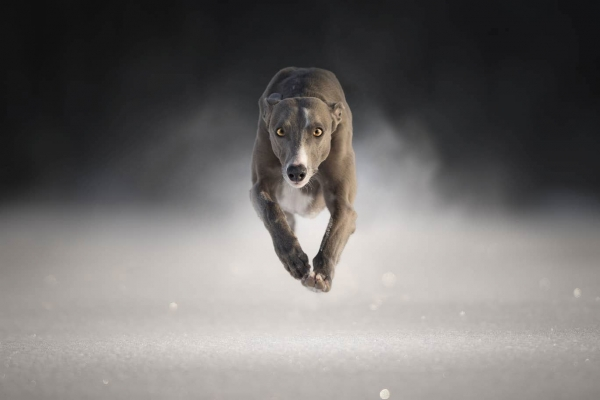 swns-jumping-dogs-13C20F7DCC-2978-EEFC-2E2F-C406DAB72528.jpg