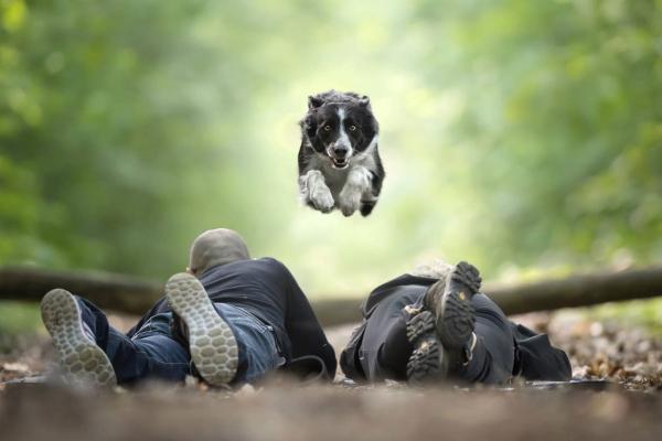 swns-jumping-dogs-159E145E8B-FA85-AD70-42B1-375A8169EFDD.jpg