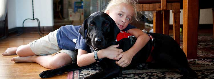 stella and black labrador