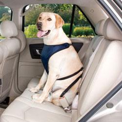 Αποτέλεσμα εικόνας για σκυλος σε αυτοκινητο