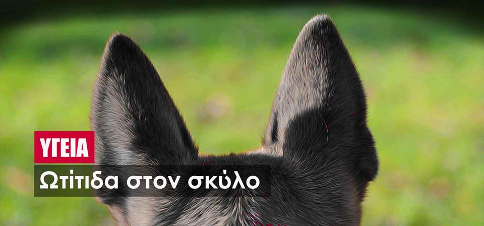 76a501a5e11b Ωτίτιδα στον σκύλο - Living with Dogs