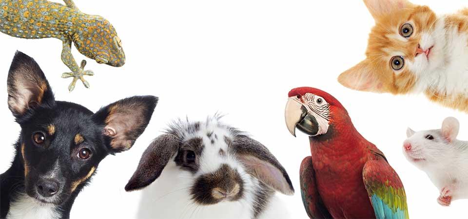 Αποτέλεσμα εικόνας για Ζώα