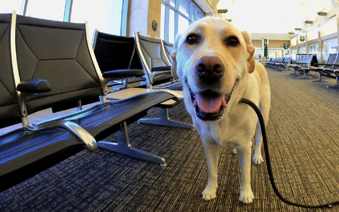 dog-airport