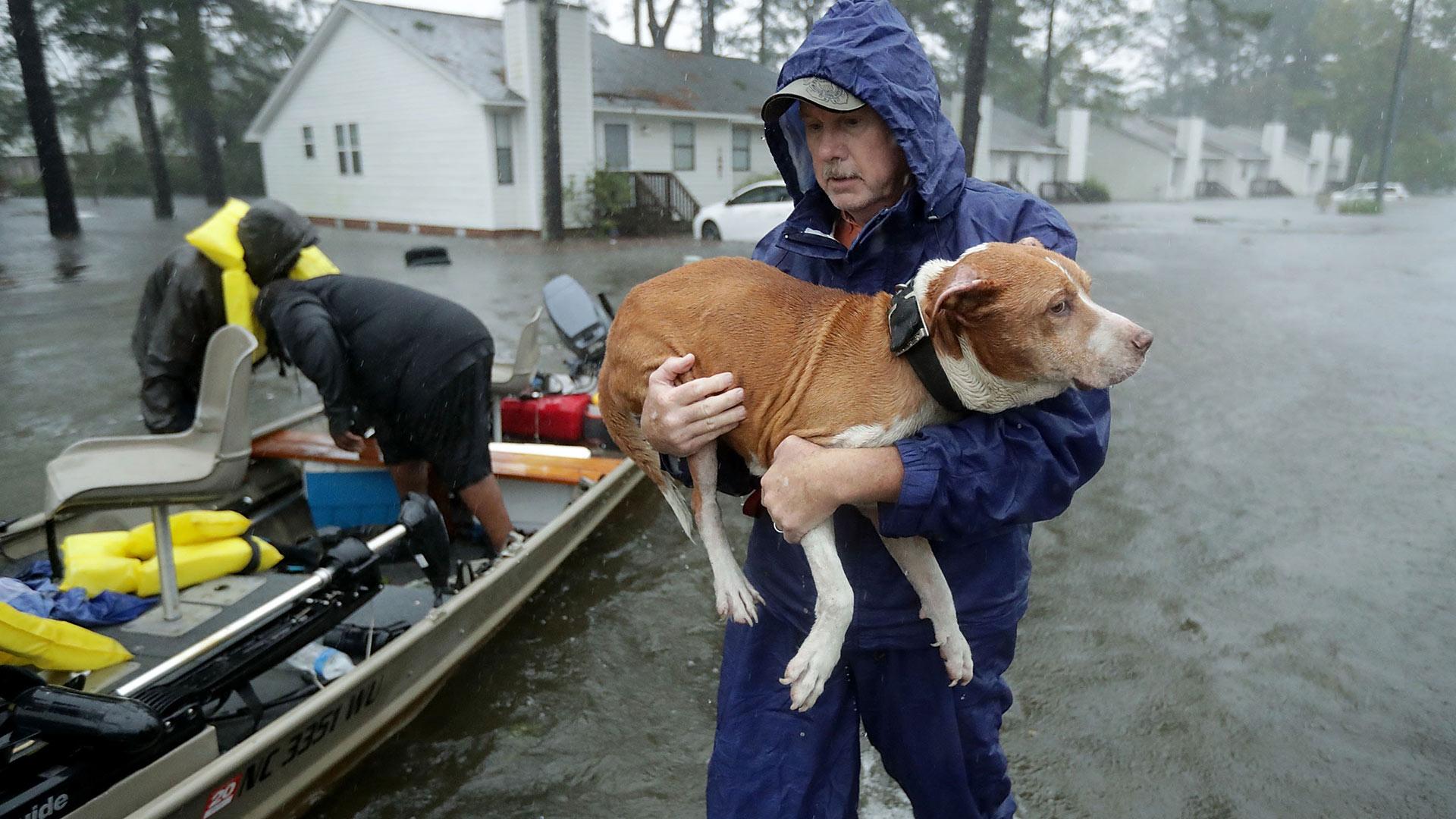 hurricane-florence-rescue-dog1920x1808