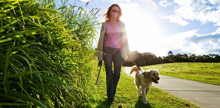Σκύλος λουρί βόλτα